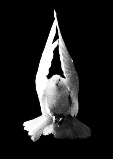Paix pour l'humanité dans Mes poèmes: Amour